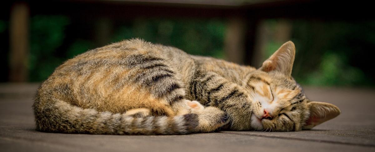 Healing Animal Allergies & DivineTruth